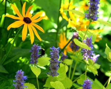 Perennials at Reems Creek Nursery & Garden Center